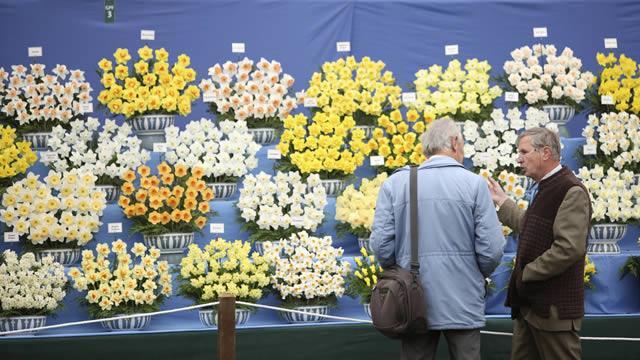 выставка цветов в челси