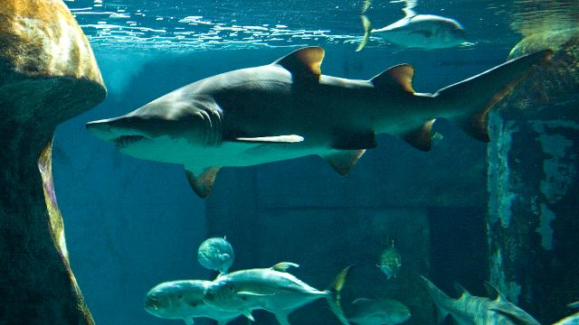 SEA LIFE London Aquarium - Sightseeing - visitlondon.com
