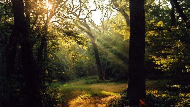 Epping forest open space for Rainforest londra