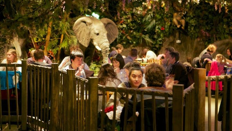 Rainforest Cafe London Opening Times