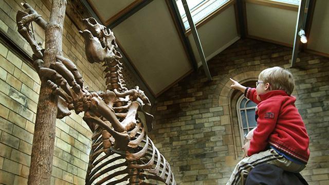 British Natural History Museum Tube