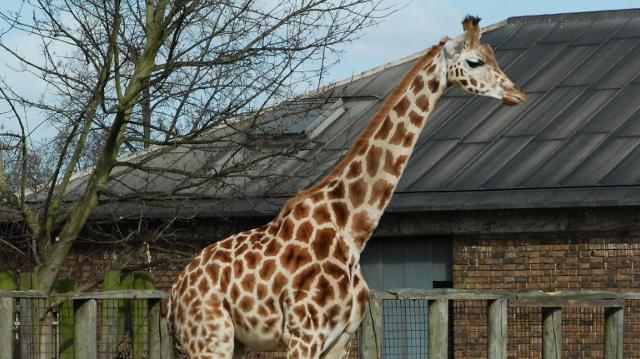 escort par næstved zoo park