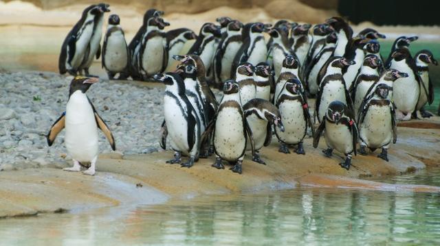 Images à modifier Zsl-london-zoo-penguin-beach-czsl-london-zoo-1-6da4c3fe82677ea406d37e8126a54fc7