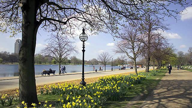 Daffodils alongside the serpentine hyde park image for Kensington park