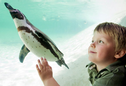 Boy and penguin at ZSL London Zoo