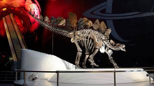 Dinosaur at Natural History Museum. Photo: Natural History Museum