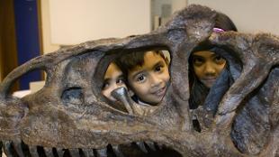 Skull at Natural History Museum. Image: Natural History Museum