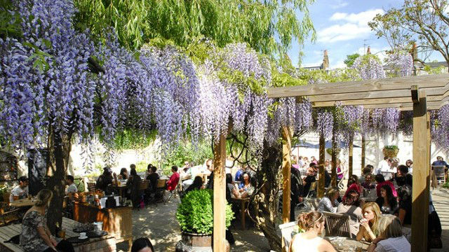 Best beer gardens in london things to do for Garden trees london