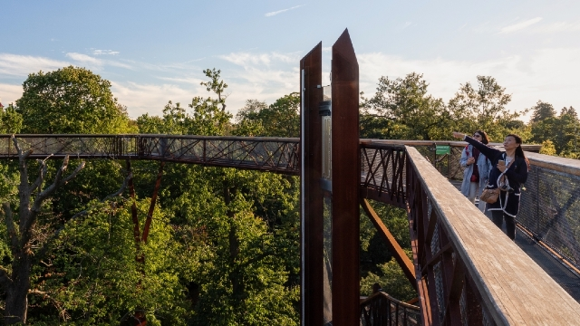 Two people admiring the tree-top view from this elevated walkway.