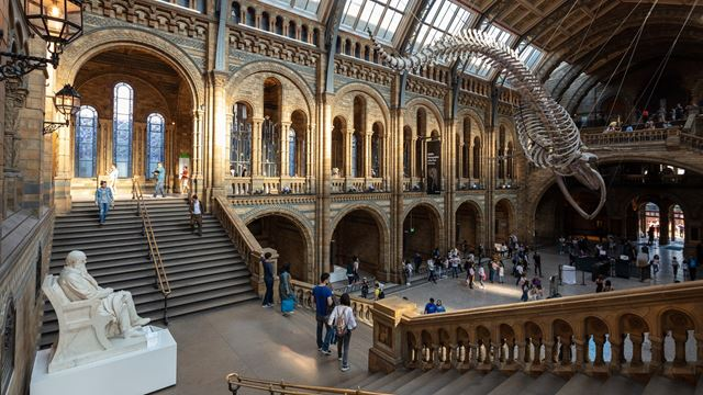 The steps at the back of the Natural History Museum's Hintze Hall on the left lead into the main hall on the right with the blue whale skeleton above