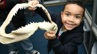 A young boy holds up the jaw bone of a shark.