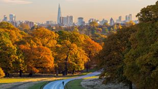 A man cycling on a long, wide path through Richmond Park with trees either side of him in autumnal colours, and the London cityscape skyline on the horizon