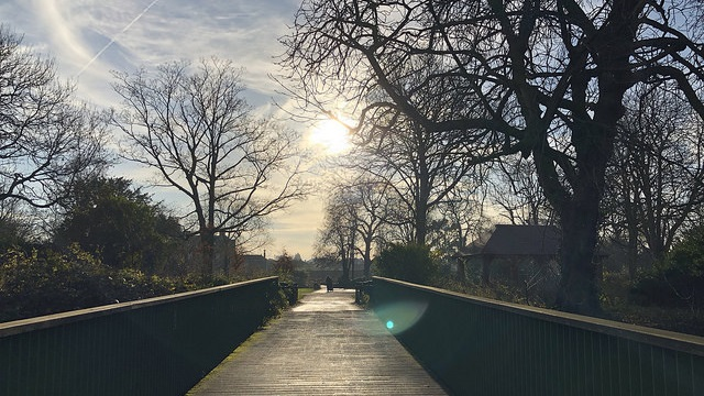 sun shines on a bridge surrounded by trees at Walthamstow Wetlands