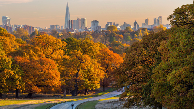 London panorama above golden trees.