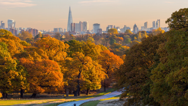 Autumn views of London's skyline in the distance from Richmond Park on a sunny day