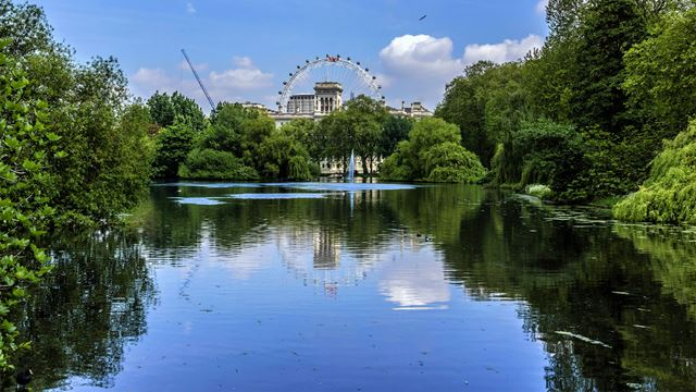 Looking across the lake at St James's Park on a sunny day. The park is lined with green trees, and the London Eye is in the background - all of which are reflecting in the water.