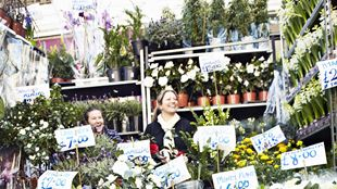 Market seller surrounded by potted plants at Columbia Road Flower Market