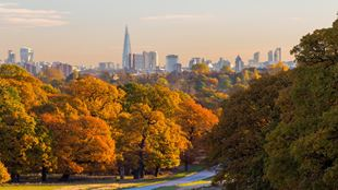 Richmond Park trees in autumn with London skyline in the background.