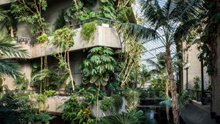 Green plants grow over concrete walk ways at the Barbican Conservatory.