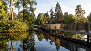 Reflections of trees in the water surrounding the Sackler Bridge at Kew Gardens.