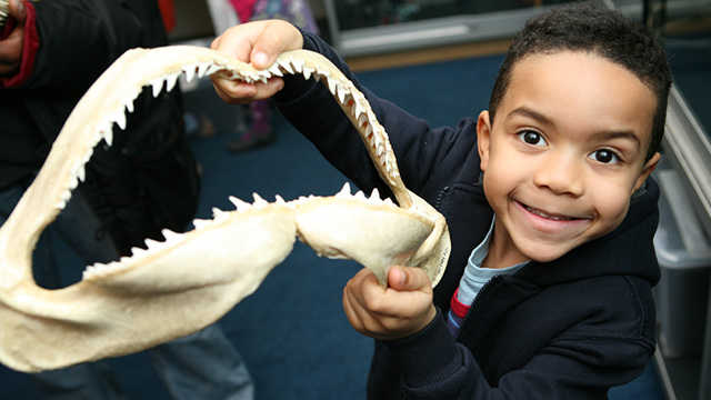 A child looking impressed by one of the shark teeth exhibits during a learning session at the Horniman Museum and Gardens.