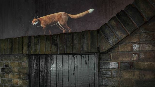 Fox drawn on a wall as part of the Beasts of London exhibition at the Museum of London