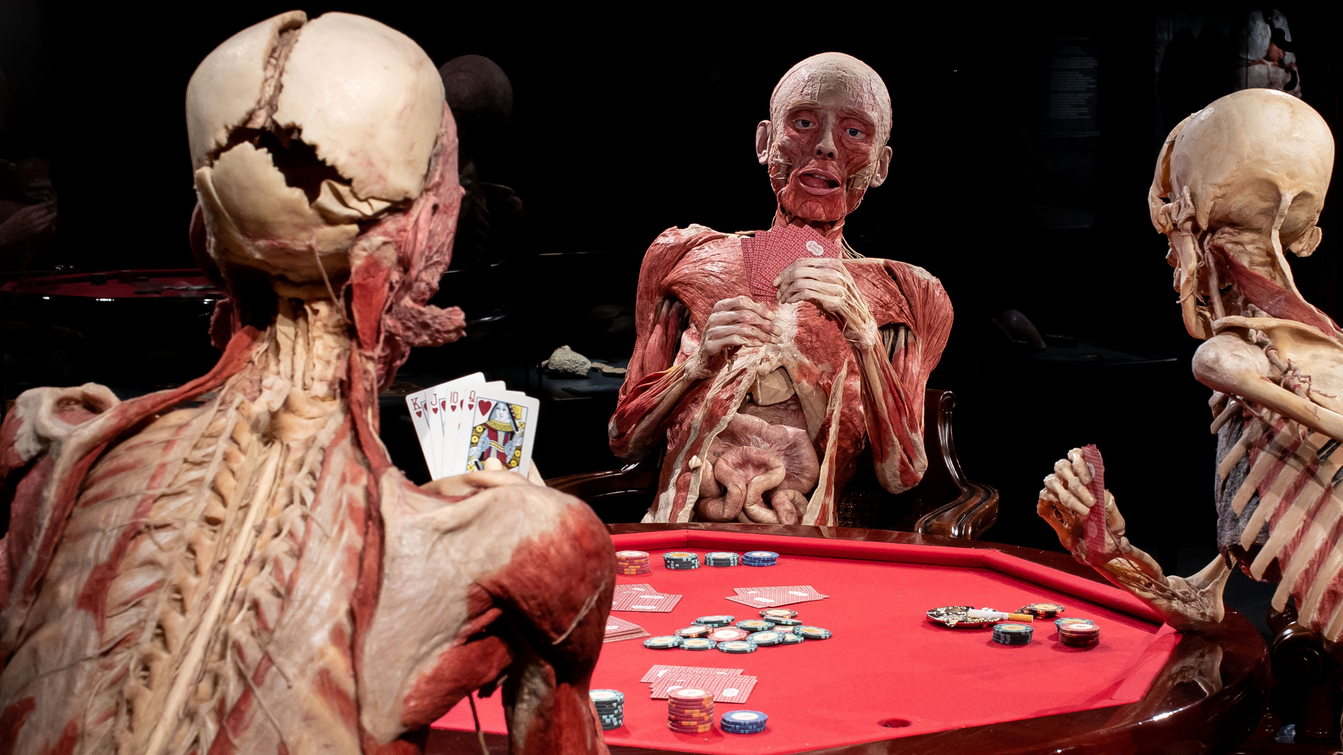 Three skeletons playing poker as part of Body Worlds exhibition