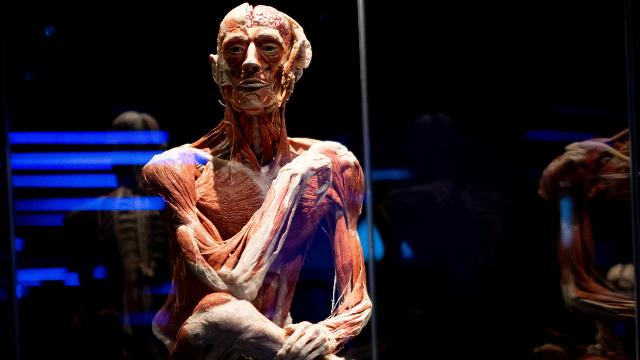 A skeleton with part bone part flesh sitting crossed legged with one arm placed in its leg and the other across the shoulder in a pondering stance