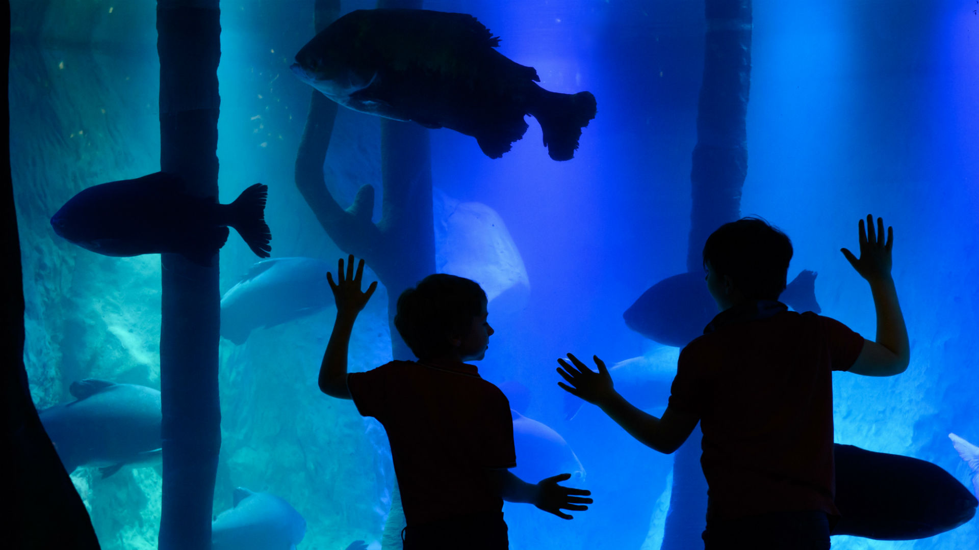 Image of children in front of fish tank at SEA LIFE London's Rainforest Adventure!