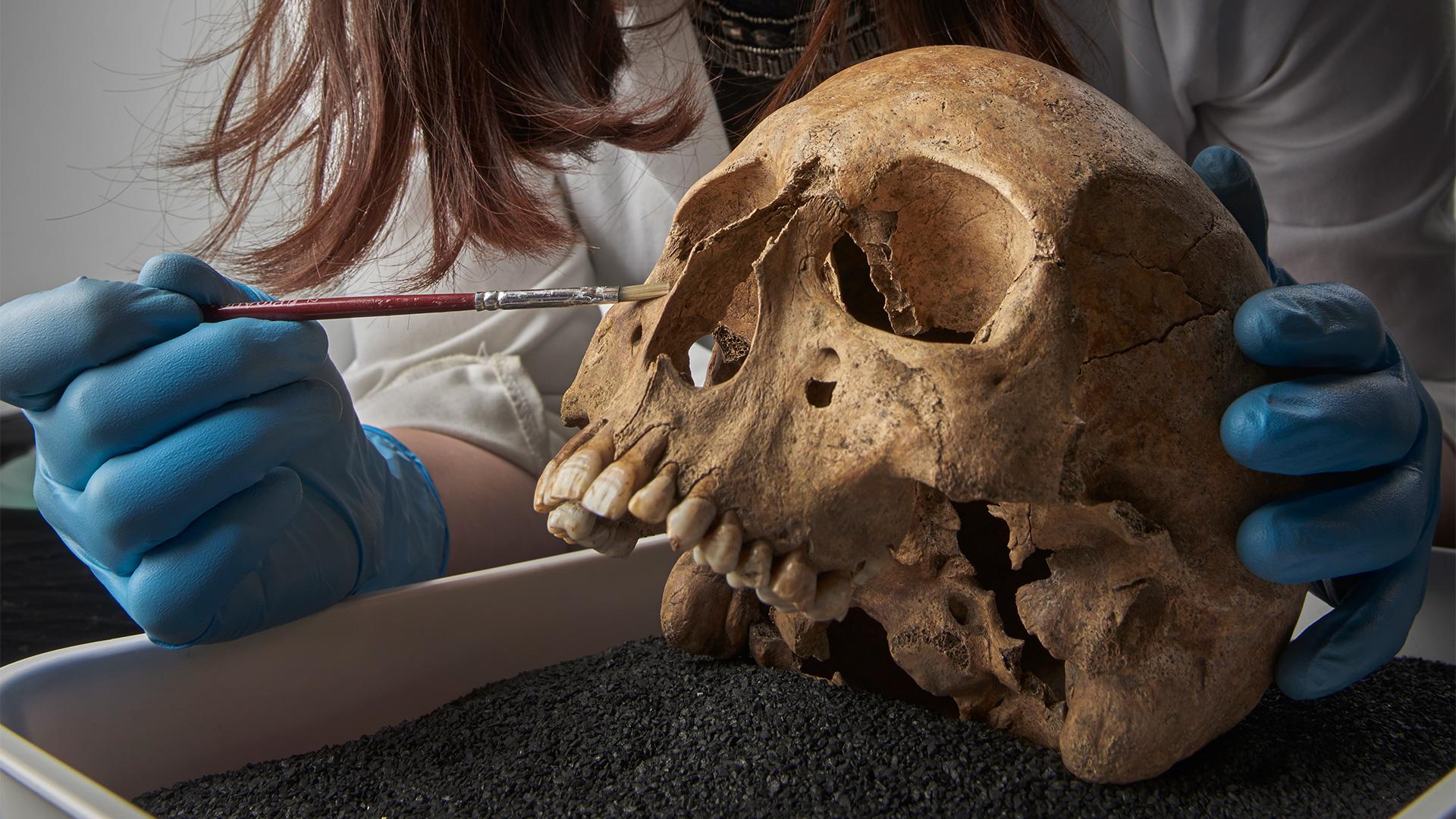 A lady examines a human skull.