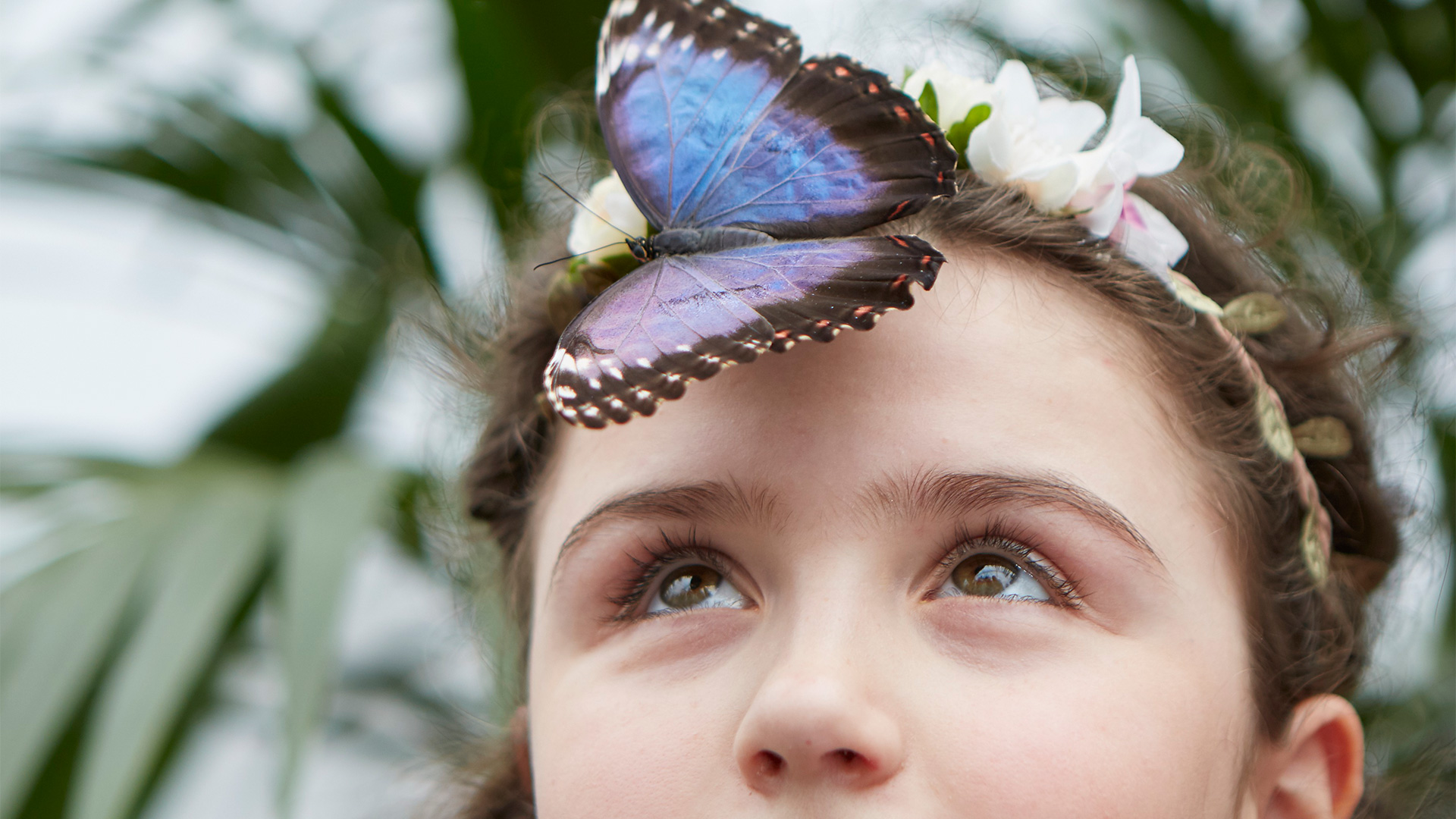 A girl looks up at a butterfly, which has landed on her forehead.
