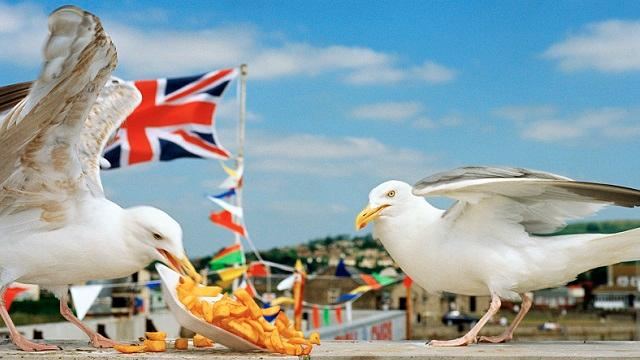 Photograph of two pigeons eating chips on a beach