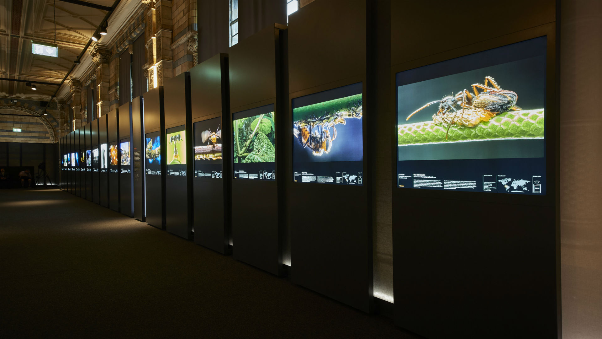 Photographs on display at Wildlife Photographer of the Year at the Natural History Museum
