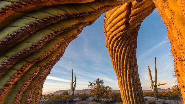 Photograph of cactus and desert for wildlife photographer of the year exhibition.