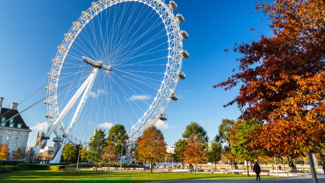A woman walks along a path passing autumnal trees with clear skies and the London Eye in the background.