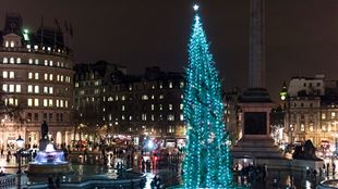 The illuminated Christmas tree in Trafalgar Square, lit with strings of white lights, at night.