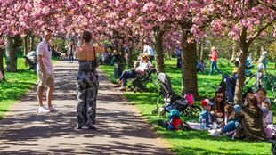People sitting at the grass, under the cherry blossoms in Greenwich Park.