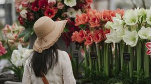 A woman looking at the colourful flowers during the RHS Chelsea Flower Show.