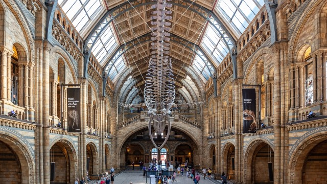 A whale skeleton exhibit hanging at the Natural History Museum. Credits: visitlondon.com/Jon Reid.