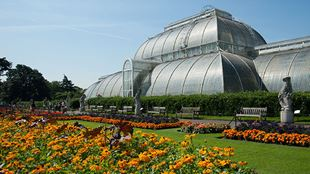 The glass Palm House in Kew Gardens on a sunny day, with orange flower and grass in the foreground.