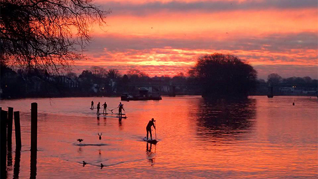 A group of five paddleboarders paddle along the Thames at sunset.