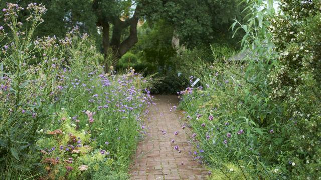 Chelsea Physic Garden - Garten - visitlondon.com