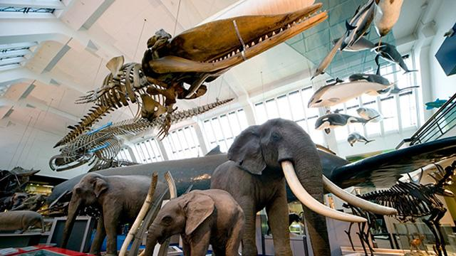 Whats In Natural History Museum