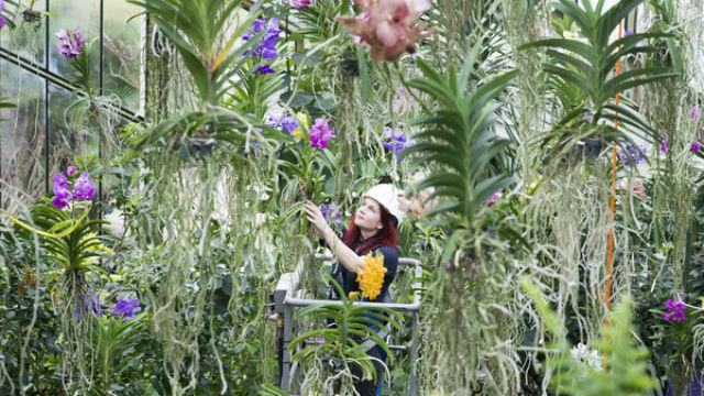 Orchids Festival At Kew Gardens Special Event