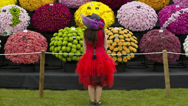 how to show a flower at a show gardens