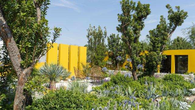 Roses In Garden: RHS Hampton Court Palace Flower Show