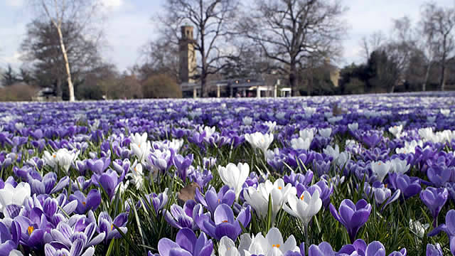 Spring in london whats on visitlondon sisterspd
