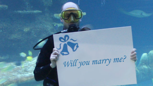 Proposal at the SEA LIFE London aquarium